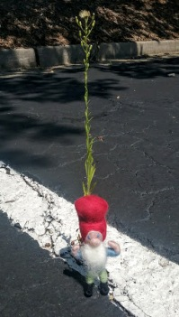 parking lot gnome