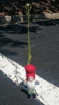 parking lot gnome